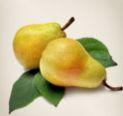 Buy Pear seedlings