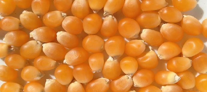 Satın al Popcorn Premium