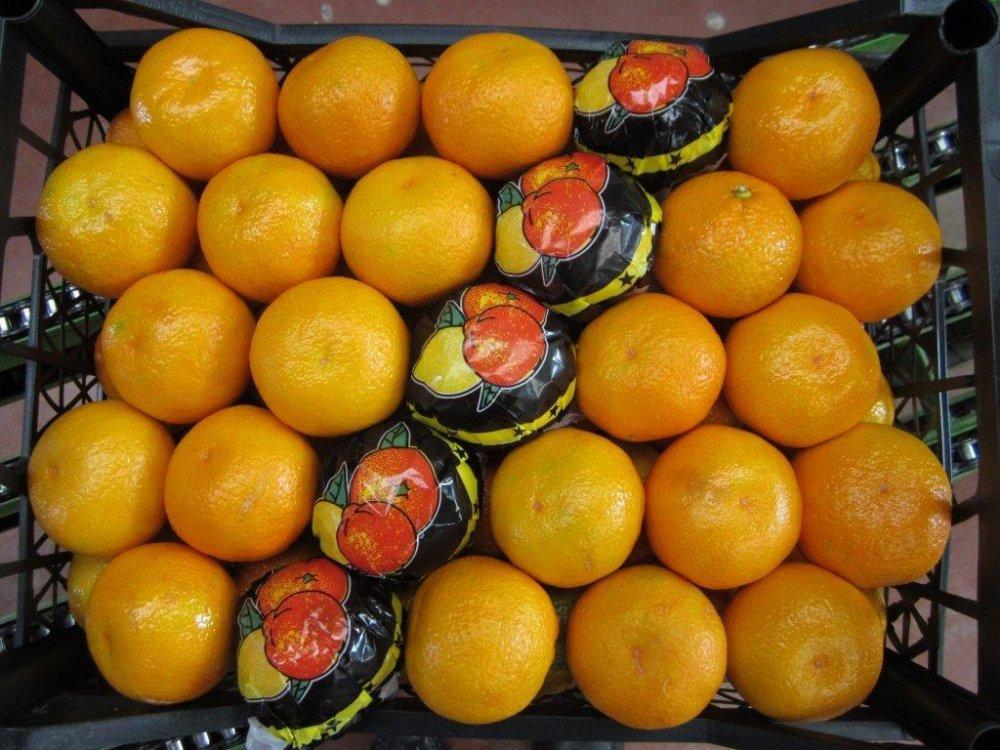 Satın al Mandarine