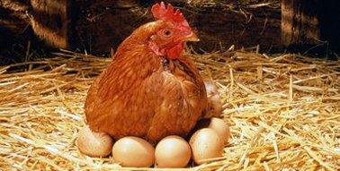 Satın al Yumurta