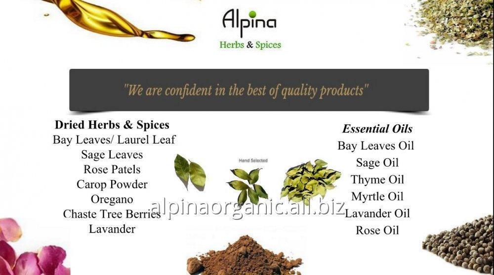 Satın al ADAÇAYI-sage-bay leaves-defne-kekik-herbs-doğal bitki