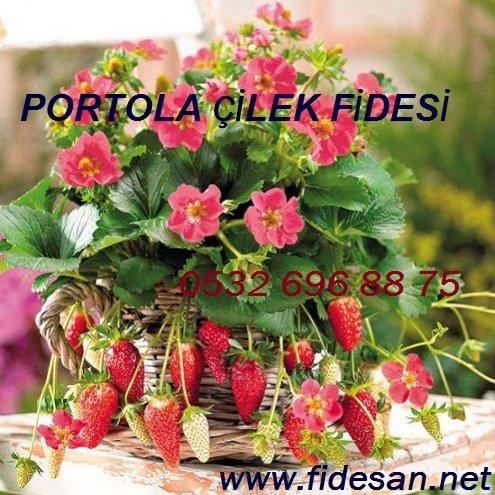 Satın al Portola çilek fidesi özellikleri