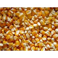 Satın al Corn (Mısır)