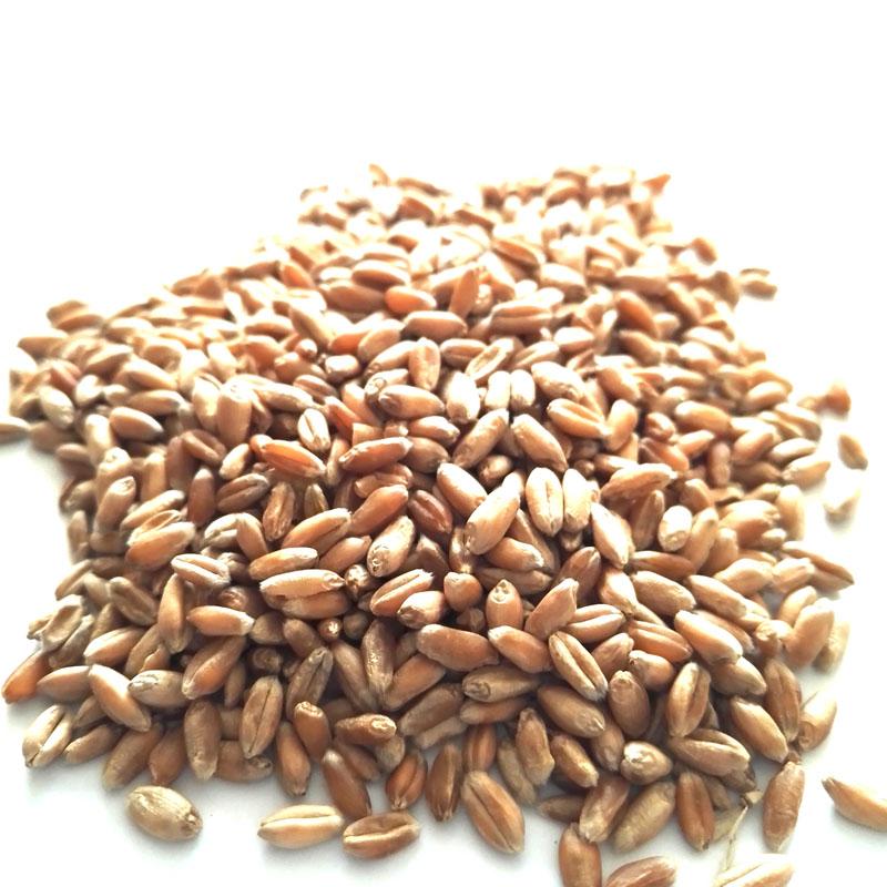 Satın al Buğday