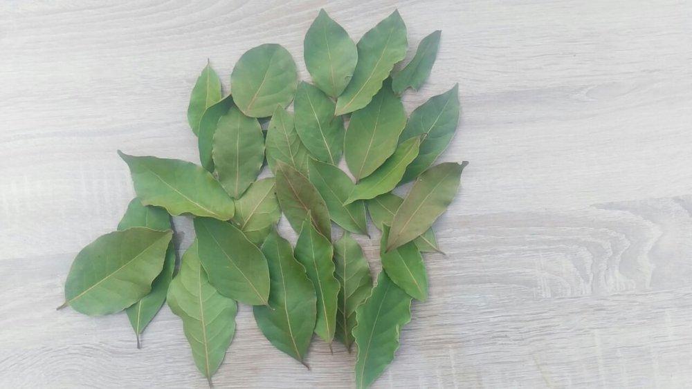 Satın al Kurutulmuş İşelenmiş Defne Yaprağı Iselin were followed Dried Laurel Leaf