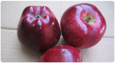Satın al Scarlet spur elma fidanları