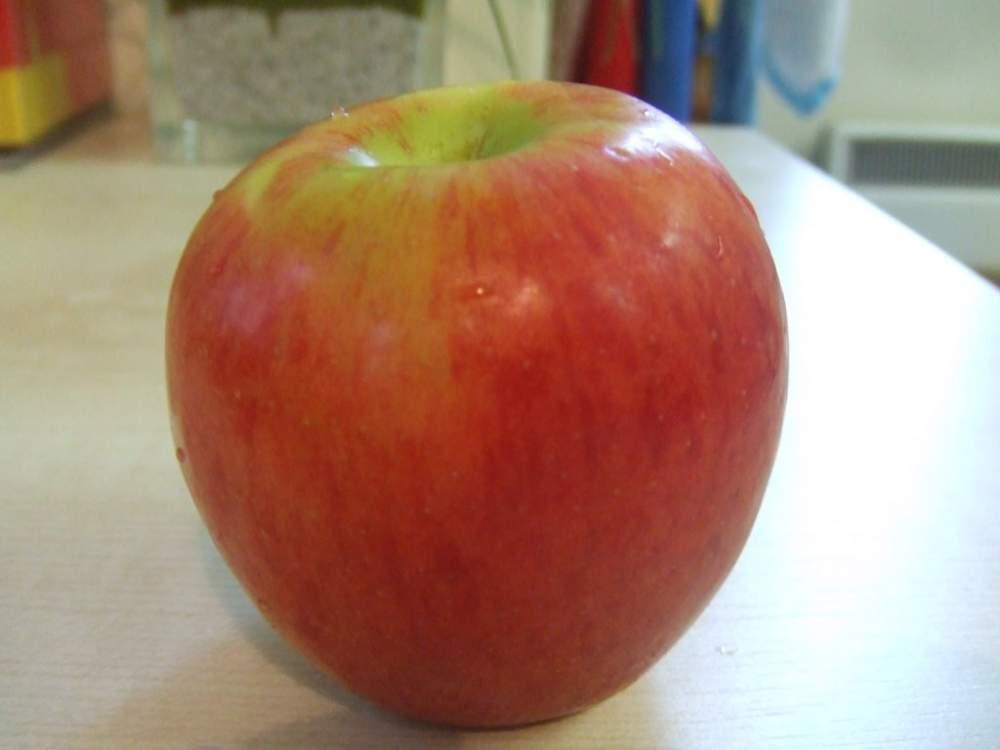 BREBURN elma fidanı, elma ağacı