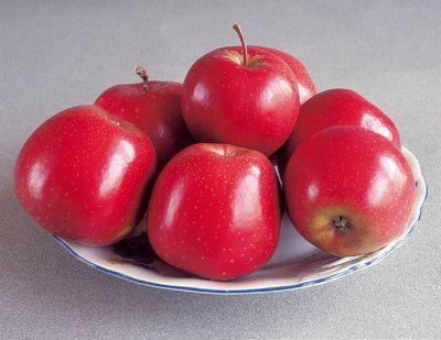 Elma Fidanı, MONDİAL GALA
