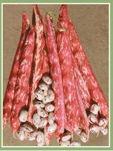 Satın al Sebzelerden Olan Barbunya Çeşidi Splendido Üretimi