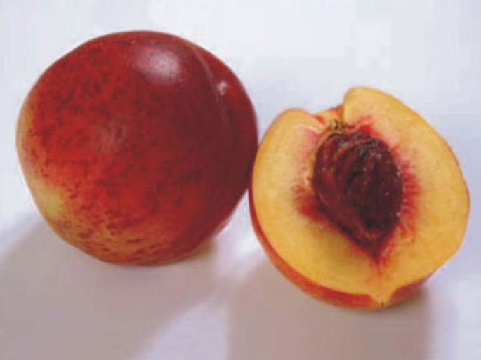 Buy Nectarine seedlings