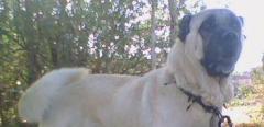 Köpek ve Köpek Yavrusu Üretimi ve Uygulamaları