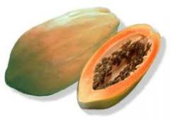 Papaya meyveleri