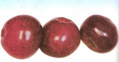 Aydared elması