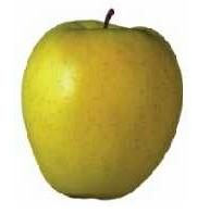 Farklı Çeşitlerde Elma Üretimi