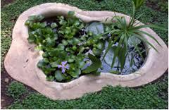 Bitki havuzu uygulamaları