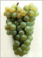 Viognier B beyaz üzüm