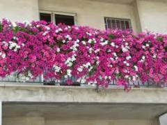 Agrofino pro balcony plants