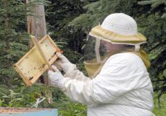 Doğal at yelesi ve keçi kılından yapılmış arı