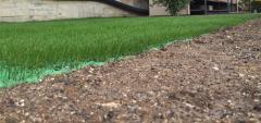 Als grass (grass als)