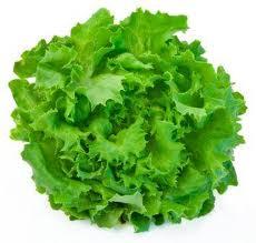 Kıvırcık Salata Demet