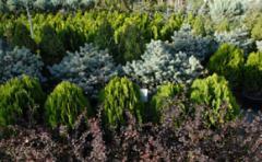 Dışmekan bitkileri