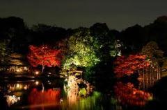Teras bahçesi, çatı bahçesi, kaya bahçesi, japon
