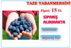 Taze Yabanmersini