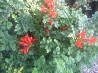 Çok yıllık bitki