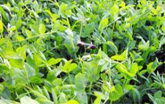 Yemlik bitkiler