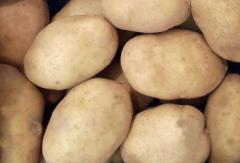 Kızartmalık Patates