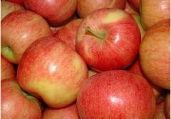 ROYAL GALA APPLE FROM TURKEY FOR SALE