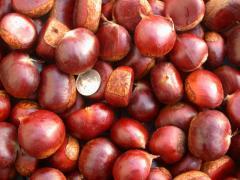 2017 new crop fresh chestnut