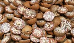 High Quality Wholesale Sliced Cut Dried Betel Nuts