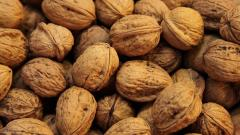 Quality in shell and kernel Walnut