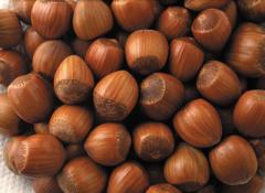 Blanched Hazelnuts/ Hazelnuts In shell & Kernels/ Organic Hazel Nuts