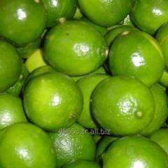 Grade A Fresh Green Lime / Lemon