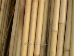 Bambu- Bamboo
