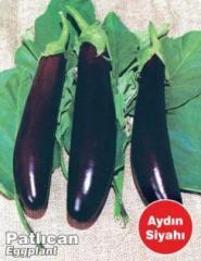 Balıkesir Patlıcan Aydın Siyahı 55 tipi tohumları,