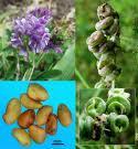 Yem bitkileri,yem bitkisi,yem bitkileri