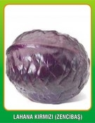 Hạt giống bắp cải đỏ