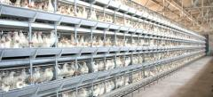 Equipment for broilers