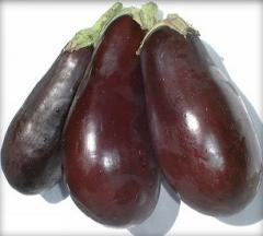 Patlıcan (Rıfat Turgut)
