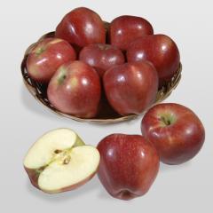 Elma Fidanı, STARKRİMSON DELİCİOUS