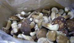 Mushrooms frozen
