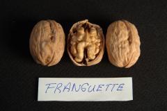 Ceviz fidanı Franguette