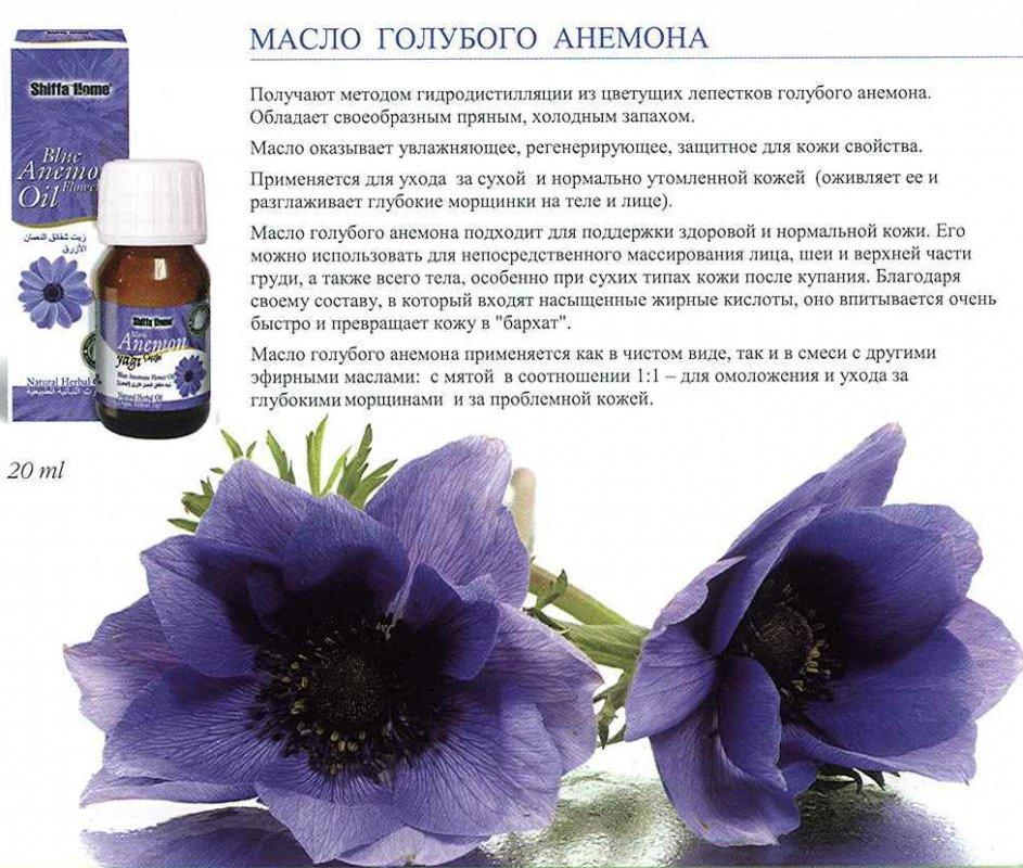 Blue Anemone Oil Aksuvital Dogal Urunler Gida Sanayi Ve Ticaret Anonim Sirketi All Biz