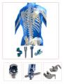 Spinal implantları