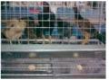 Tavuk kafesi