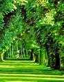 Ormancılık uygulamaları