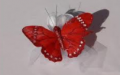 Kelebek şekeri
